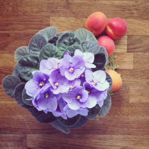 violetas_mbc